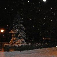Падал Новогодний снег.... :: Алёна Савина