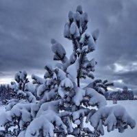 Мороз снежком укутал. :: Сергей Комков