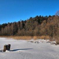 Зимний лес :: Андрей Куприянов