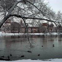 на прудах Новодевичьего Монастыря :: Борис Соловьев