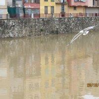 Чайка над каналом. Испания :: Герович Лилия