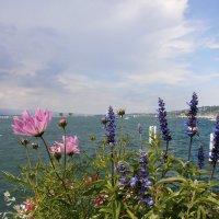 Лето в Женеве :: Алёна Савина