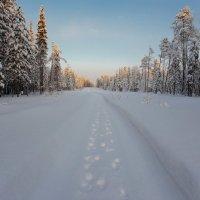 таёжный тротуар :: Сергей