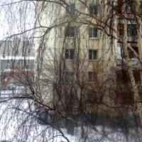 Берёзовые оттенки в домостроении :: Натали Акшинцева
