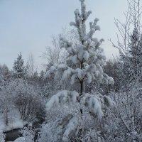Всё белым бело вокруг :: Галина