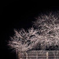 Морозной ночью... :: Анатолий Клепешнёв