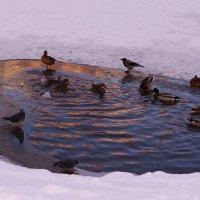 Зимний пейзаж :: kolyeretka