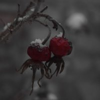 Зимняя ягода :: Наталья Ремизова