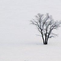 Зимнее дерево :: Константин Филякин