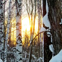 Закат в зимнем лесу... :: Константин Филякин