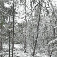 Зима приходит и уходит. :: Eino Pessi
