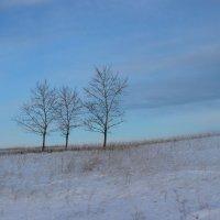 три сестрички в поле... :: Мария Дроговоз