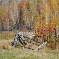 Осень :: Ирина Горбунова
