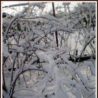 Снежок :: Татьяна Пальчикова