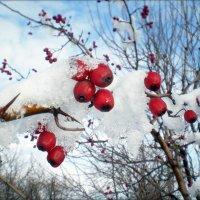 Плоды осени под снегом :: Татьяна Пальчикова
