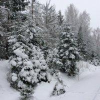 Снежно так :: Dogdik Sem