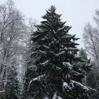 В лесу родилась й-олочка :: Dogdik Sem