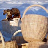 Готовь корзины зимой :: Валерий Талашов