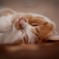 засыпаем :: Юлия Fox