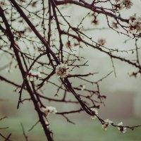 весенний туман :: Alena Al'eva