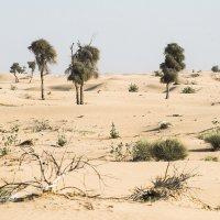 Пустыня, но не голая :: MVMarina