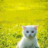 Котёнок :: Alex Bush