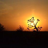 Закат в пустыне... :: Данила Бондаренко