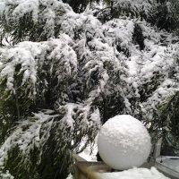 Нежданный снегопад. :: Жанна Мааита
