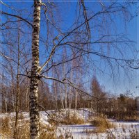 Зимний день 2 :: Андрей Дворников