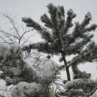 Был снегопад... :: BoxerMak Mak