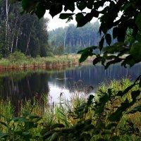 лесное озеро :: evgeni vaizer