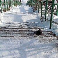 эскалаторов не надо, мне и лестница сойдет... :: Александр Корчемный