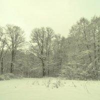 лес грабовый :: Михаил Жуковский