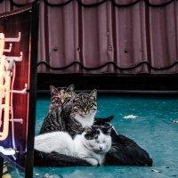 Коты в Нью-Чикаго :: Lemis ...