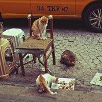 Пиршество стамбульских котов :: Ирина Лепнёва