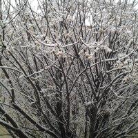 Зимние причуды. :: Жанна Викторовна