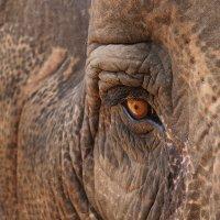 слон :: Алексей Карташев