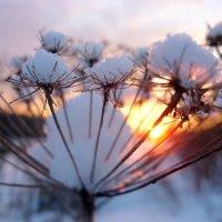 Сквозь солнце :: Павлова Татьяна Павлова