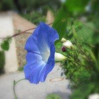 Цветок :: dli1953