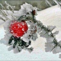 Зимнее... :: muh5257