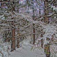 лес-полный чудес :: Михаил Жуковский