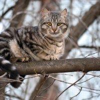 Кошачьи приключения( на дереве) :: Nina Streapan