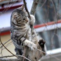 Кошачьи приключения( спуск) :: Nina Streapan