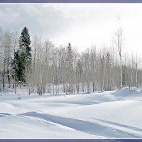 Зима. :: Любовь Чунарёва