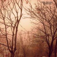 my sweet garden....... :: Elen Balasanyan