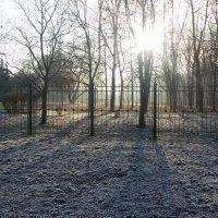 утро в сиреневом саду :: Ярослава Машукова