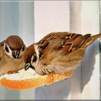 и хлеба горбушку, и ту пополам) :: linnud