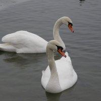 На озере в Печорах :: Валентина Папилова