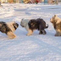солнечные собачки :: Лариса Батурова