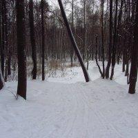 IMG_9991 - Трамплины велосипедистов зимой :: Андрей Лукьянов